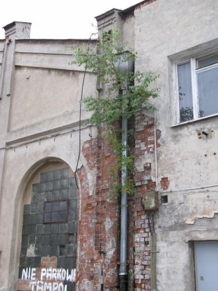 http://kolejkamarecka.pun.pl/_fora/kolejkamarecka/gallery/91_1219414533.jpg