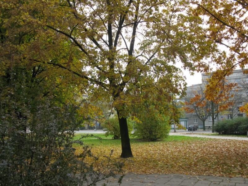 http://kolejkamarecka.pun.pl/_fora/kolejkamarecka/gallery/91_1223912182.jpg